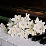 piano, keys, jonquils