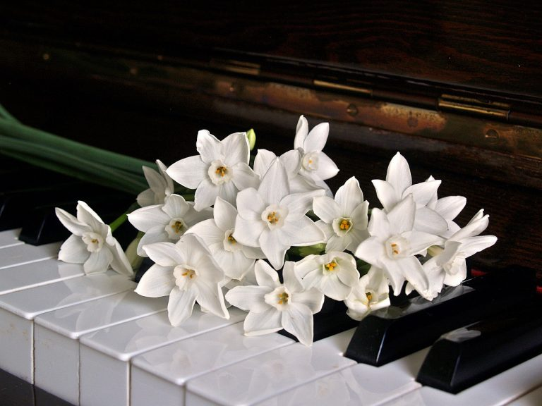 piano, keys, jonquils